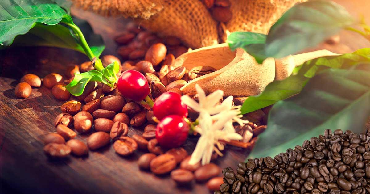 Il caffè robusta e il legame con Napoli